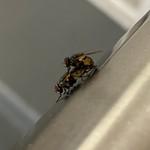 Flies gettin down